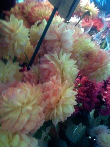 Flowers_from_public_market_1